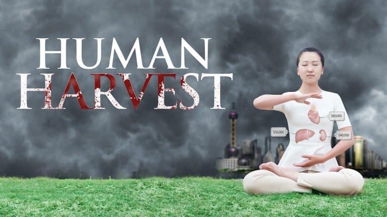 Human Harvest