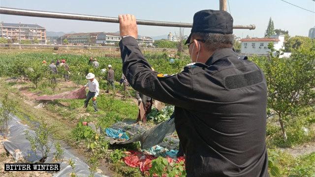 i sostegni per le colture sono stati distrutti